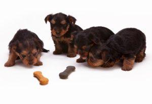 Futtercheck Für Ihren Hund 1