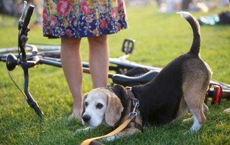 Fahrradfahren Mit Dem Hund 1