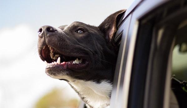 hund an das auto gewöhnen