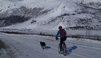 Radfahren Mit Dem Hund Lernen In 7 Schritten