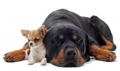 Training & Erziehungstipps Für Hunde-Duo 1