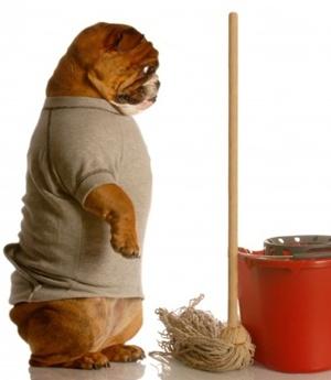Den Hund Stubenrein Bekommen