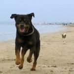 Jagdtrieb Des Hundes abgewöhnen