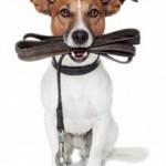 Hund An Die Leine Gewöhnen