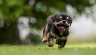 agila hunde versicherung