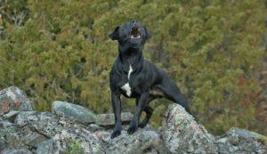 hund bellen abtrainieren