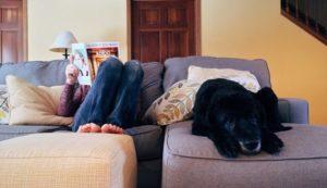 hund stubenrein tipps