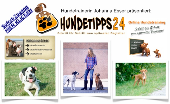 online hundetraining johanna esser der 12 wochen kurs im erfahrungsbericht hund trainieren. Black Bedroom Furniture Sets. Home Design Ideas