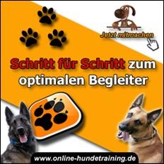 Online Hundetraining von Johanna Esser