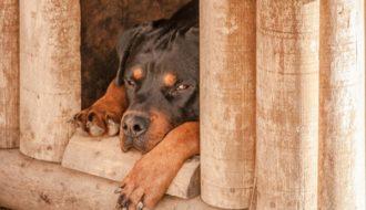 hundehütte kaufen online test