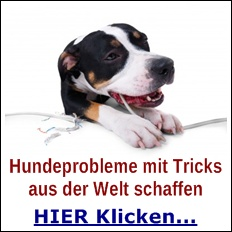 Hunde Probleme