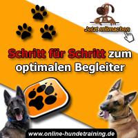 Hunde Probleme Lösen: Praktische Tipps... 2