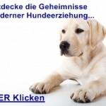 Einfaches Hundetraining Ben Bretsch