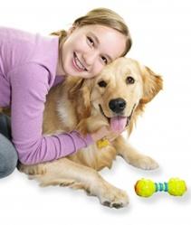 Hund trainieren - Effektives Hundetraining