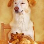 Hundefutter Rezepte selber machen