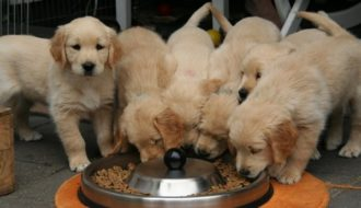 hundefutter rezepte herstellen