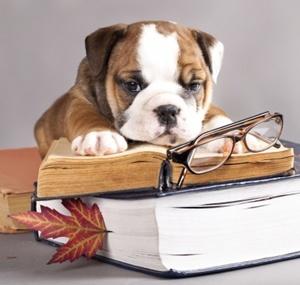 Hundeerziehung Für Welpen - 4 Wichtige Grundlagen 1