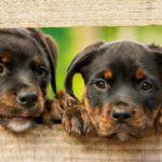 hundewelpen erziehung tipps