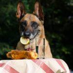 Hund An Die Leine Gewöhnen 3 Tipps & Schritte 1