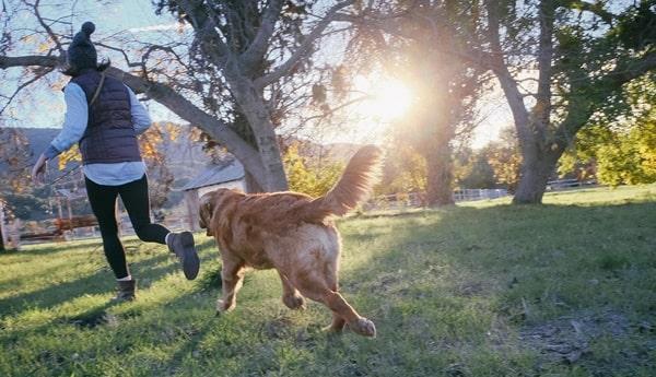 hunde clicker training anleitung