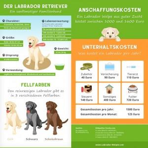 Labrador anschaffen: Worauf Muss Man Achten? 3