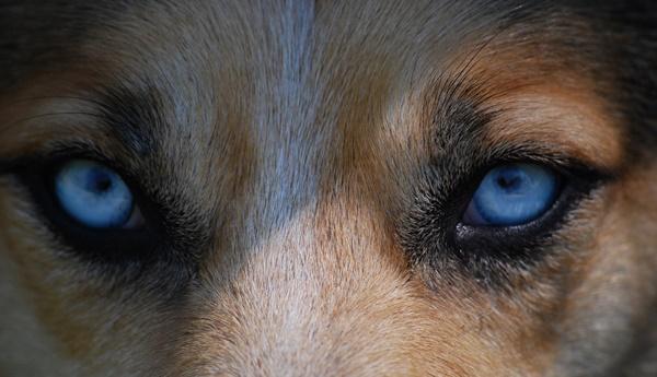 hund jagdtrieb abgewöhnen