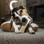 Trennungsangst Bei Hunden Überwinden 1