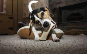 Erstausstattung für Hundewelpen 1