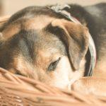 Hundebetten im Test