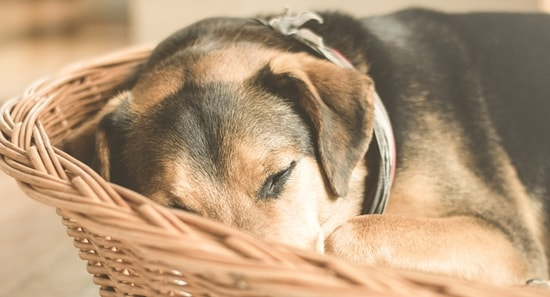 Hundebetten Im Test: Top 5 Empfehlungen