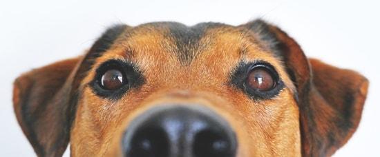 Was Tun Gegen Flöhe Beim Hund?