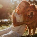 hundefell richtig pflegen