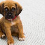 Erstausstattung Für Hundewelpen