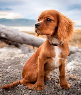 hundewelpen ausstattung