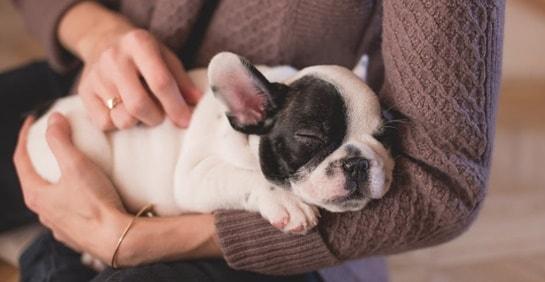 Hund beim Tierarzt beruhigen Tipps