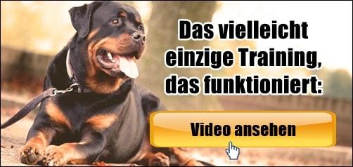 Hund Beim Tierarzt Beruhigen: 7 Tipps 1