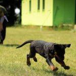 hund erziehungshilfen