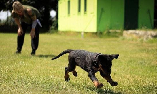 Werkzeuge & Hilfsmittel Für Die Hundeerziehung