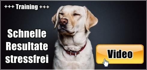 10 Hundeerziehung Fehler Vermeiden 1