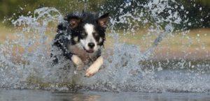 Jagdtrieb beim Hund – Was kann man tun? 3
