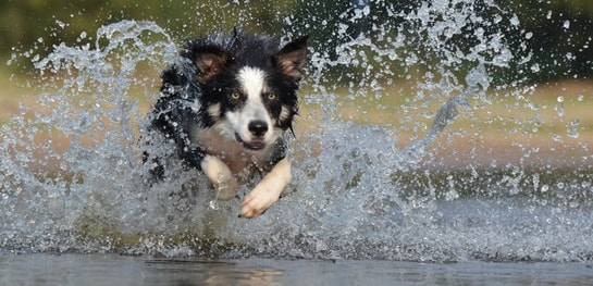 Jagdtrieb Beim Hund – Was Kann Man Tun?