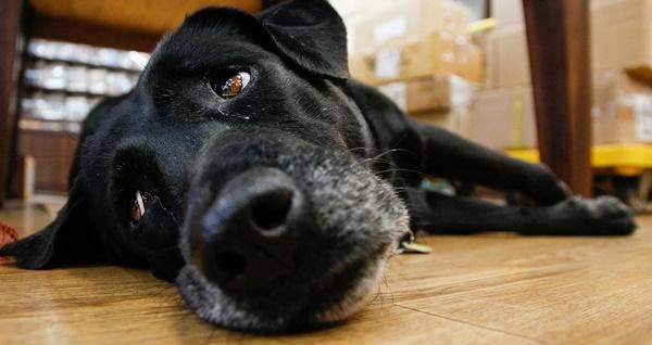Hundegeruch beseitigen und neutralisieren