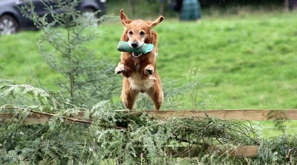 hundesport gegen langeweile beim hund