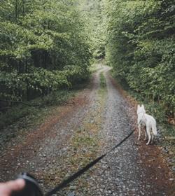 flexileine hund