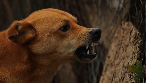 futteraggression beim hund abtrainieren
