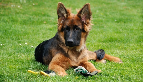 Hund Beschäftigen: 5 Spannende Suchspiel-Ideen
