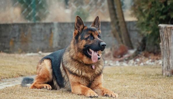 hund kommando stopp