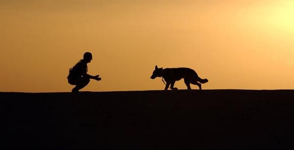 hund stopp kommando trainieren