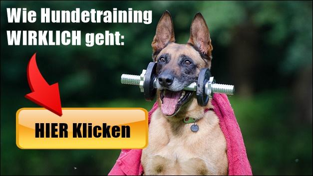 Hund STOP Kommando Beibringen: 8 Schritte 1