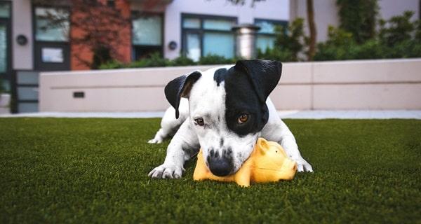 hund knabbert aus stress